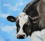 'Curious' Friesian cow by Barbara King watercolour painting